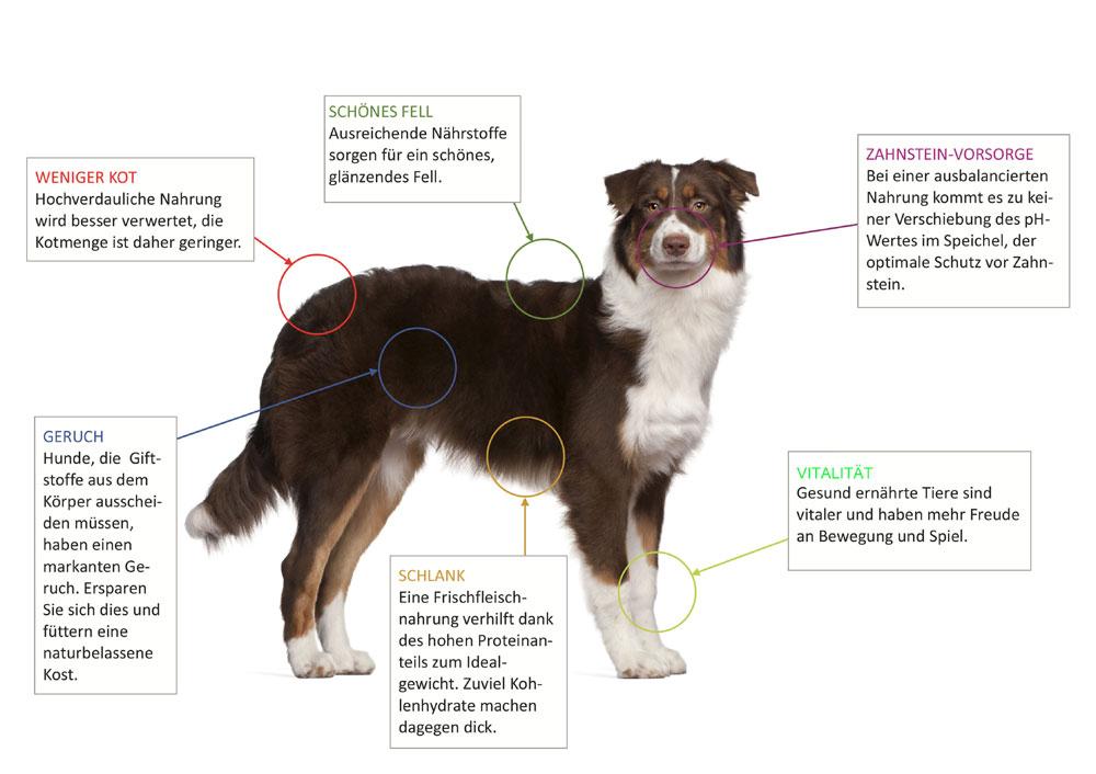 Bild-Hund