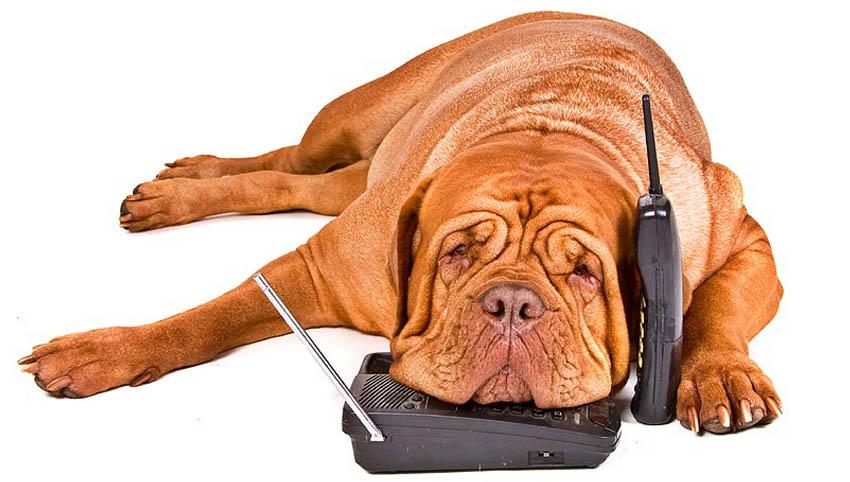 C:\fakepath\Hund am Telefon