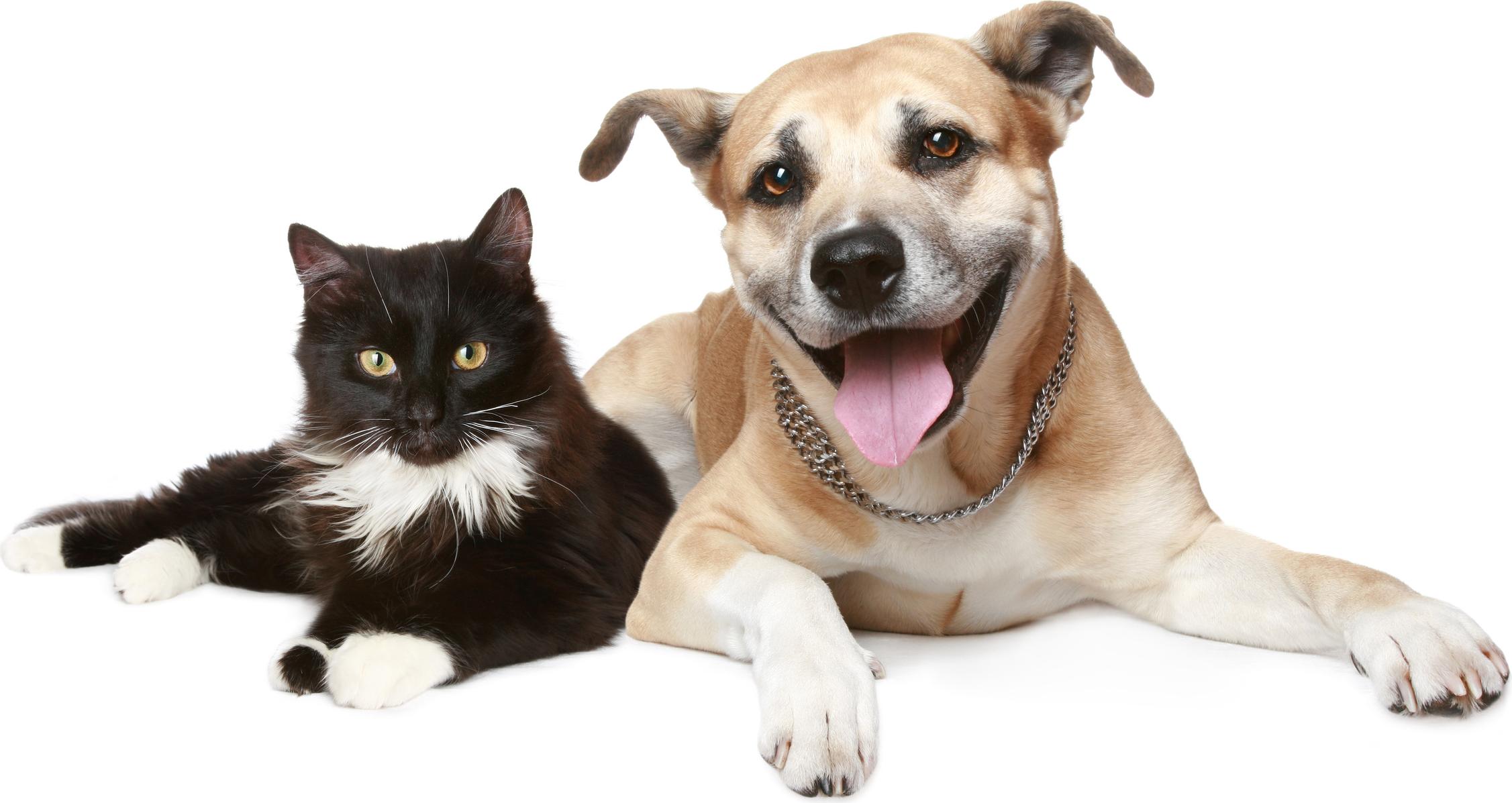 C:\fakepath\Katz-und-Hund-trans